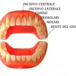 quanti-e-quali-denti-abbiamo-1400x700